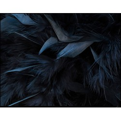 Feathers 120x180