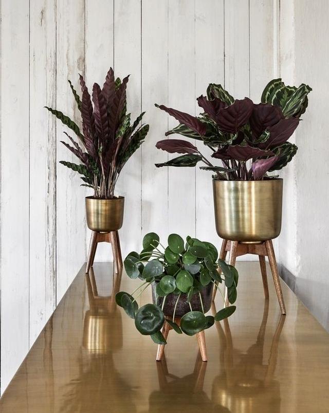 12x plantenstandaarden om je kamerplant een mooi plekje te geven