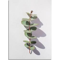 Eucalyptus blad tak abstract - Botanische poster - A4 + fotolijst wit