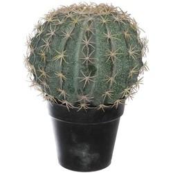 Pure Cactus 19cm in pot