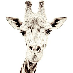 Groovy Magnets Animals Magneetbehang 265 cm - Giraffe