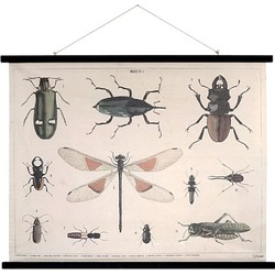 Hkliving Poster 105 x 85 cm - Insects