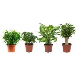 4x Diverse groene planten