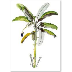 Poster 'Banana Tree' A3