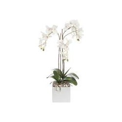 Linea Orchid in ceramic base