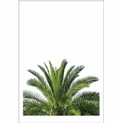 Palmtree Top (29,7x42cm)