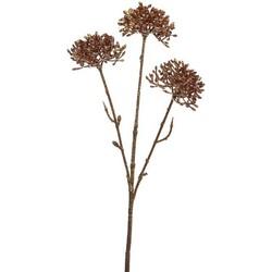 Allium Glitter