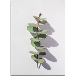 Eucalyptus blad tak abstract - Botanische poster - A2 + fotolijst wit