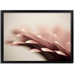 Roze bloem poster DesignClaud - Botanische poster- A3 + fotolijst zwart