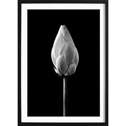Lotus Bud Black Poster (70x100cm)