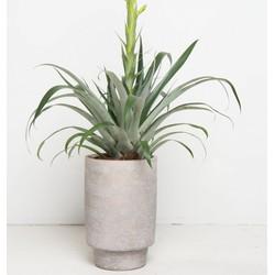 Urban Pot (Ø18,5)