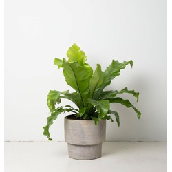 Urban Pot (Ø24,5)