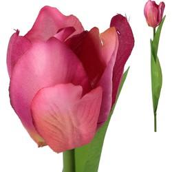 Tulip Flower - 6.0 x 5.0 x 37.0 cm