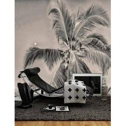 Vliesbehang XL Palm grijs 300x250 cm