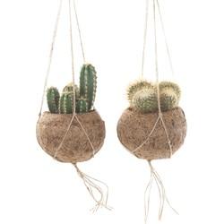 Cactus mix Kokodama - set van 2
