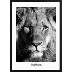 Proud Lion Poster (50x70cm)