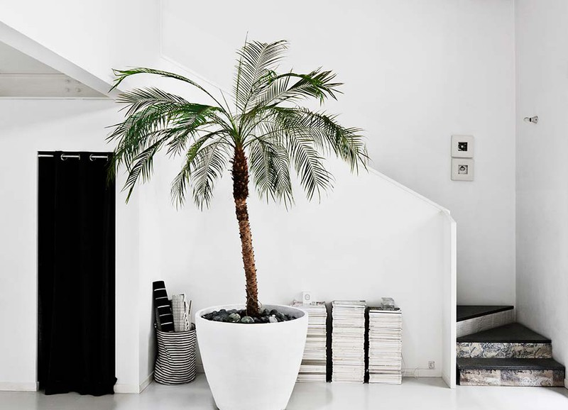 Yay or nay: palmboom in je interieur