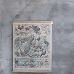 schoolkaart vogels 80x100cm