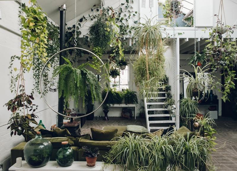 Dit zijn de populairste planten voor de herfst