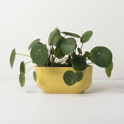 Planter - Raffia
