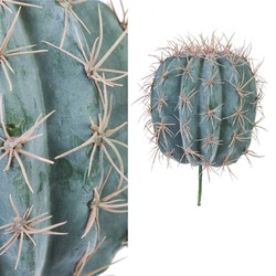 PTMD Cactus Plant Ball Simple S
