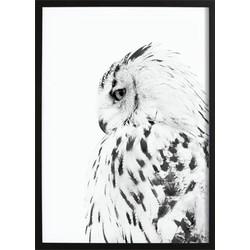 Owl Poster (70x100cm)