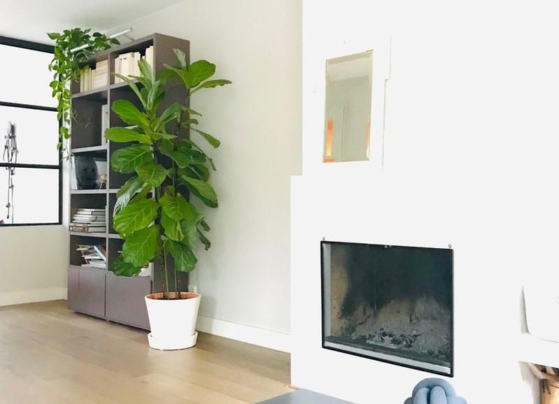 Veel ruimte in huis? Ga voor één van deze 5 grote kamerplanten!