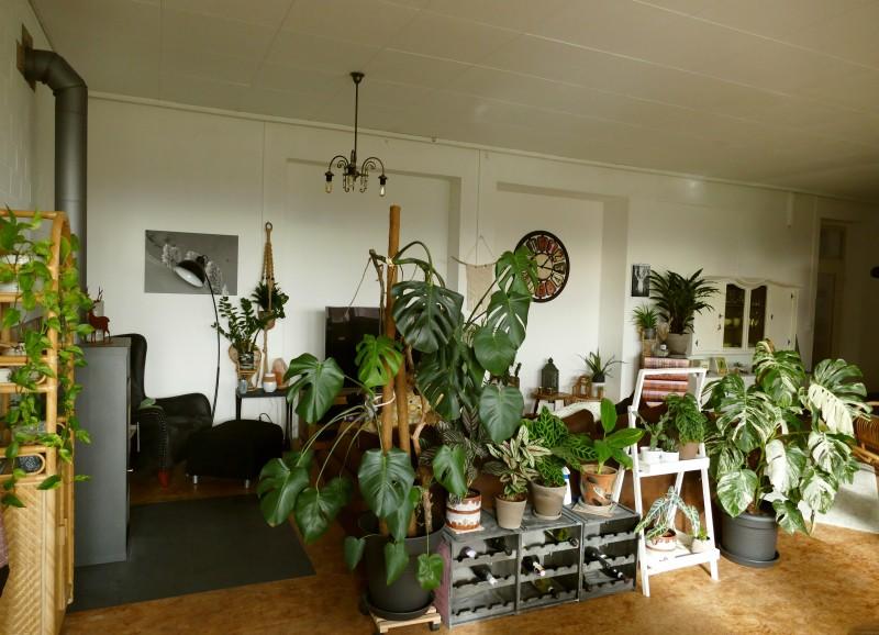 85 Pflanzen in einer alten Spielautomatenfabrik