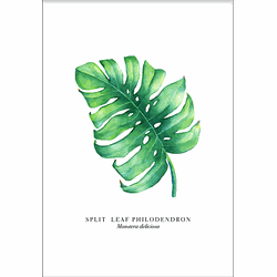 Monstera Leaf (70x100cm)