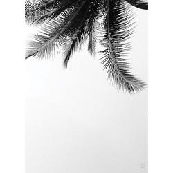SB Studio Poster 50 x 70 cm - Under the Palm Tree