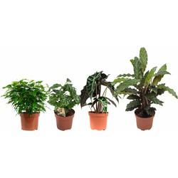 4x Toffe groene planten