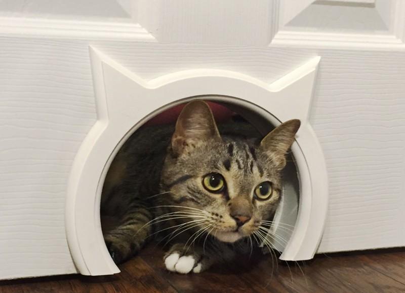 Haustiere und Interieur - eine gute Kombi?