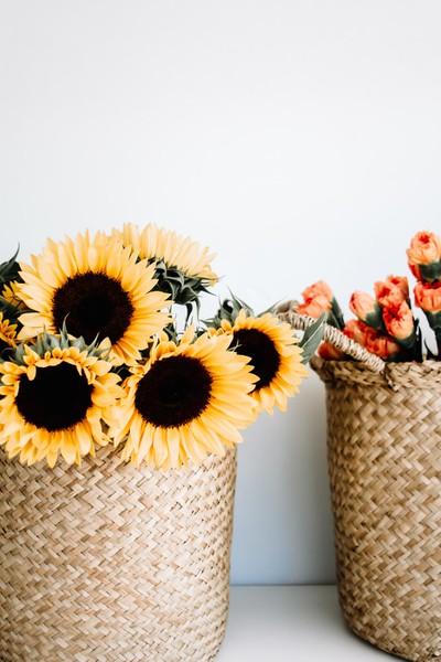 Alles wat je wilt weten over zonnebloemen