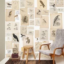 De vogels van Joseph Wolf - per rol