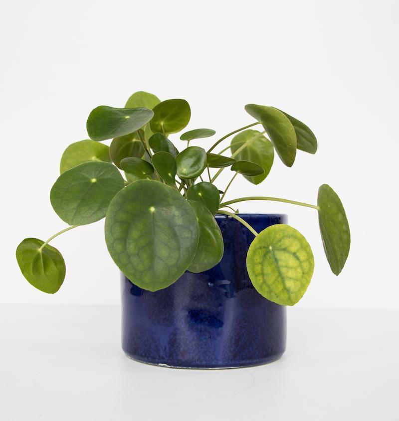 Handmade planter ceramic - Costa Azul -