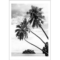 Palmtrees (21x29,7cm)