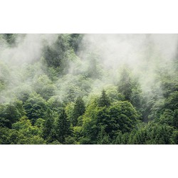 Komar Vlies Fototapete »Forest Land« 400/250 cm