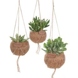 Kokodama mix (succulent) - set van 3
