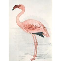IXXI - Flamingo (Finch-Davies), 100 x 140 cm