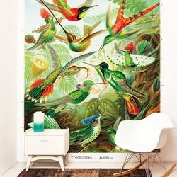 Kolibries door Ernst Haeckel - 300x300 cm (BxH)