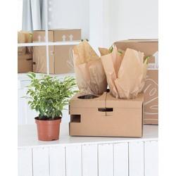 4x Traditionele groene planten mix