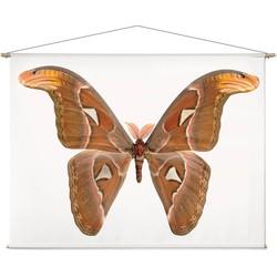 Atlasvlinder - 180 x 130 cm