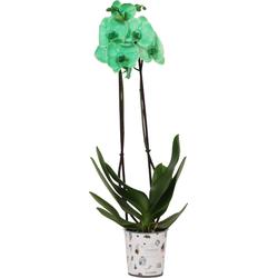 Orchidee Balance