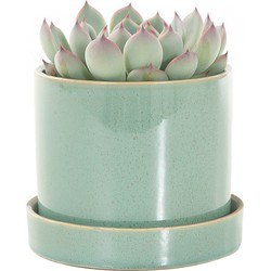 Echeveria incl. 'light green' pot