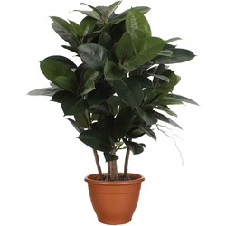 Mica Decorations ficus robusta h90d70 groen in pot