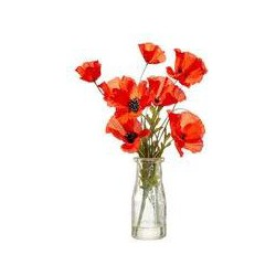 Dickins & Jones Poppies in Large Milk Bottle