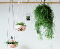 DIY: Hängende Pflanzen im Korb