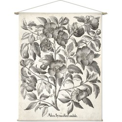 Alcea Syriaca Flore Candido - 120 x 155 cm