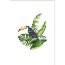 Toucan (21x29,7cm)
