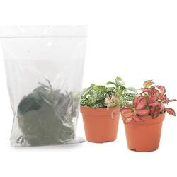 Refill pakket voor weckpot Fittonia